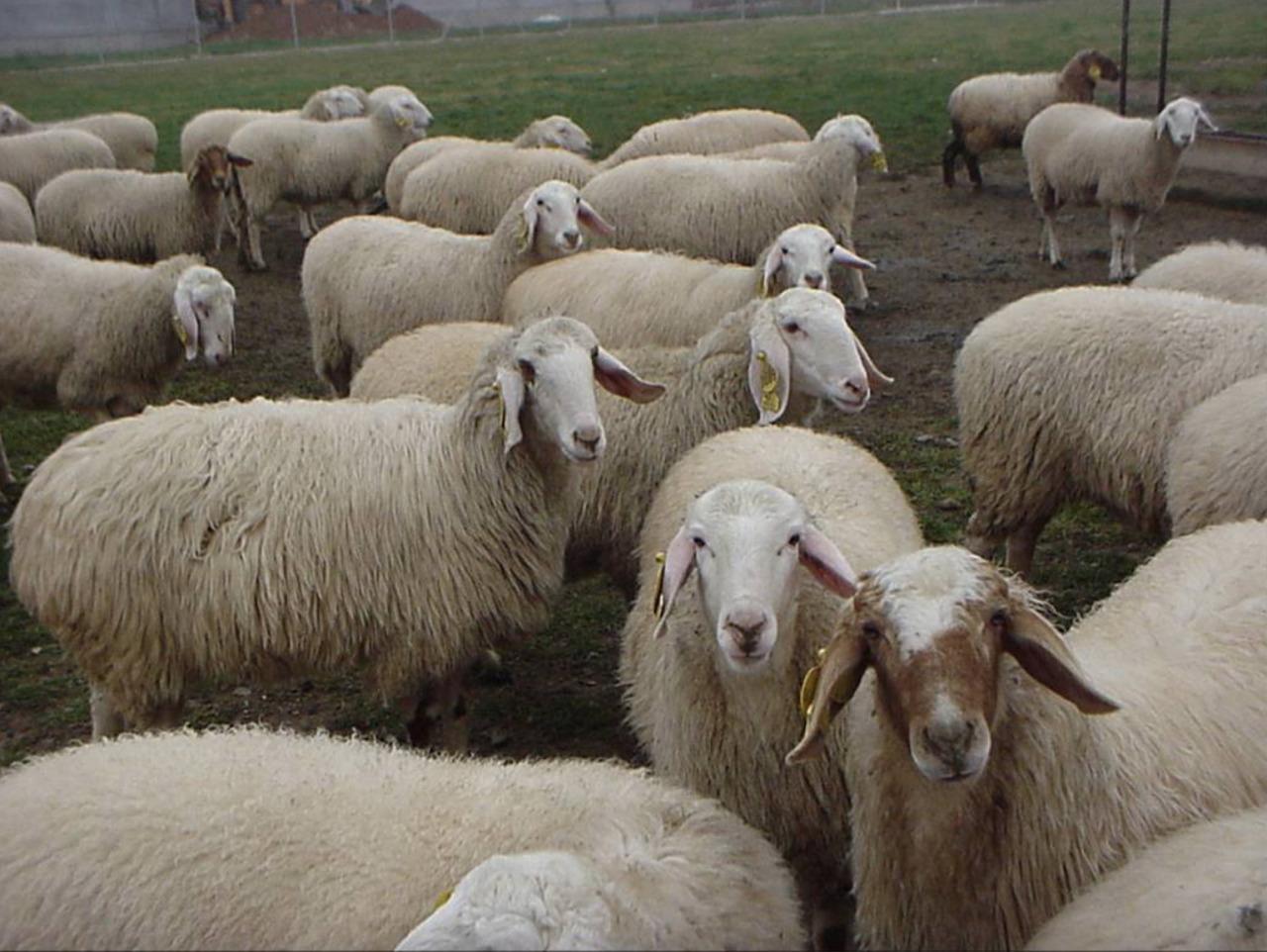 NeoCheck en la feria agropecuaria de Salamanca
